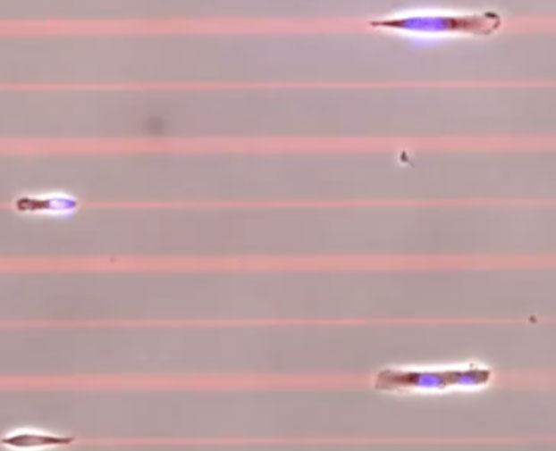"""Kì lạ cuộc thi """"tế bào nhanh nhất thế giới"""""""