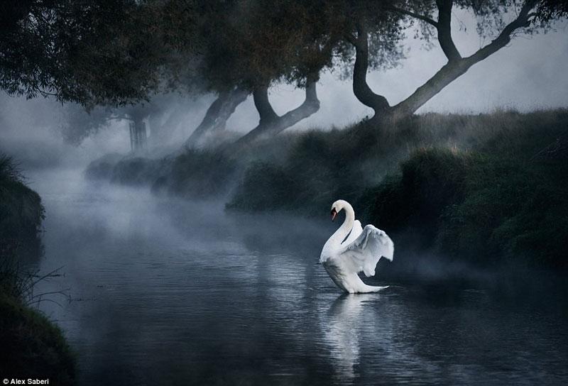 Bộ sưu tập ảnh thiên nhiên đẹp nhất nước Anh (1)
