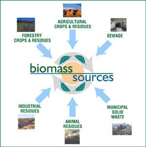 Có 14 quốc gia trong EU thỏa thuận hợp tác nghiên cứu và triển khai sản xuất nhiên liệu sinh học.