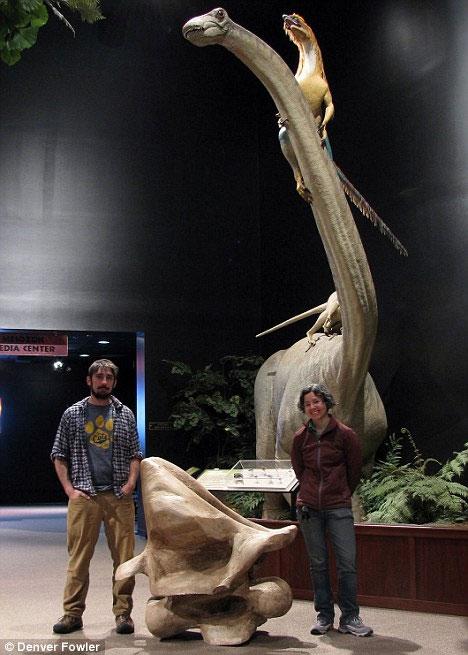 Hai nhà nghiên cứu khủng long đứng cạnh đốt sống cổ của khủng long Alamosaurus tại trường ĐH Montana State.