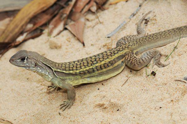 Khủng hoảng sinh thái đe dọa tiểu vùng Mekong
