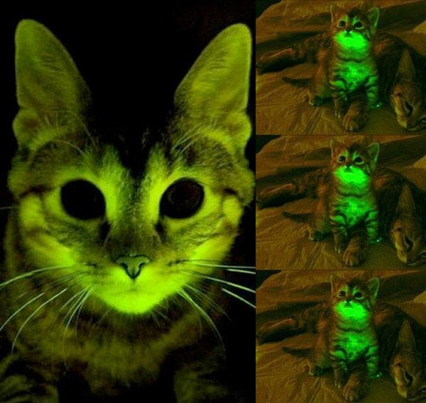 Mèo phát sáng