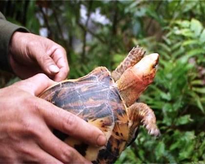 Thả 2 con rùa quý về khu bảo tồn thiên nhiên