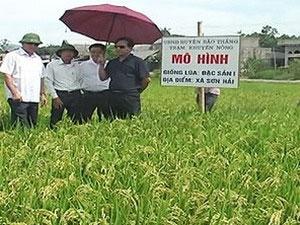Trồng thành công giống lúa chất lượng cao từ Nhật