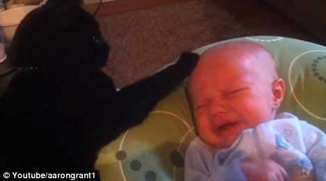 Video: Mèo dỗ và ru em bé ngủ