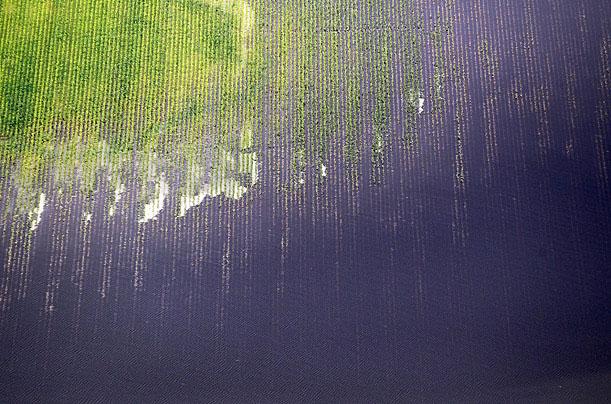 Lũ lụt ở quận Yazoo, Mississippi, Mỹ ngày 23/5/2011 làm cho cây trồng ngập trong nước và mực nước ở các nhánh sông Mississippi dâng cao.