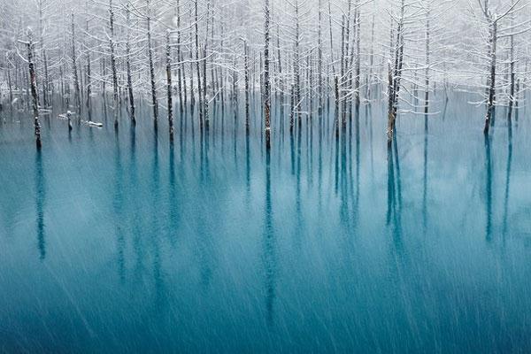 """Tác phẩm """"Hồ xanh"""" của nhiếp ảnh gia Kent Shiraishi đạt giải khuyến khích. Bức ảnh được chụp vào mùa đông tại khu nghỉ dưỡng ở Biei, Hokkaido, Nhật Bản. Hồ xanh là khu du lịch nổi tiếng, thu hút nhiều khách vào mùa xuân, hè, và mùa thu. Vào mùa đông, hồ bị đóng băng."""
