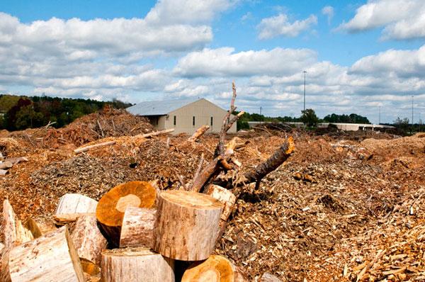 Sản xuất hóa chất và nhiên liệu sinh học từ sinh khối gỗ