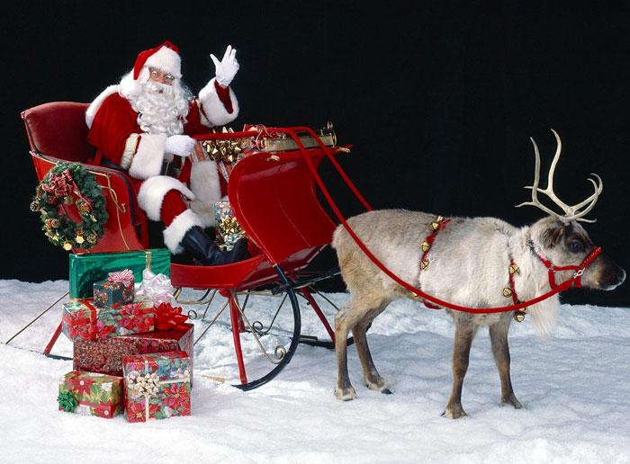 Tại sao ông già Noel lại chọn tuần lộc cái kéo xe?