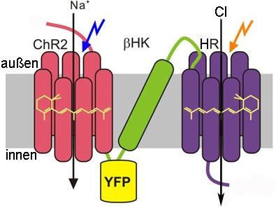 Sử dụng thiết bị chuyển mạch ánh sáng kiểm soát tế bào
