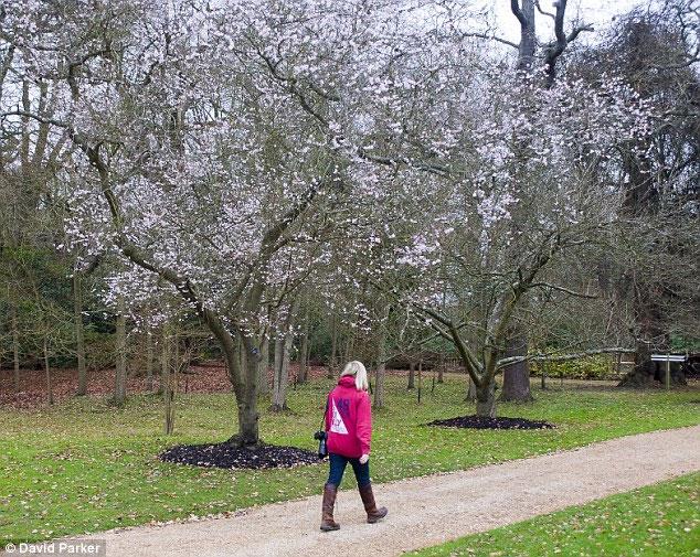 Ảnh đẹp: Hoa trái mùa thu, xuân nở trong đông tuyết ở Anh