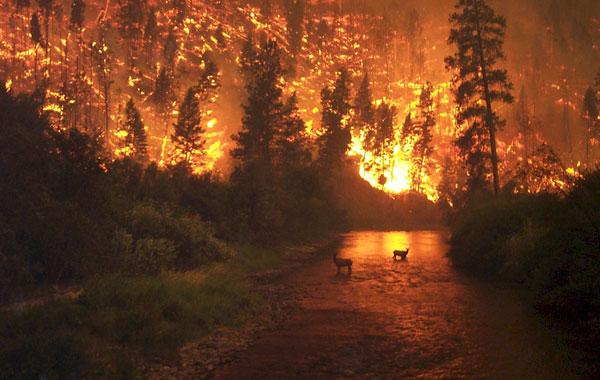 Hỏa hoạn lớn thiêu rụi 1500 hécta rừng tại Chile
