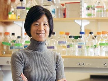 Gene NPAS4 điều chỉnh khả năng của bộ não để hình thành những ký ức mới