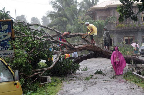 Các công nhân dọn dẹp đống cây đổ vì bão Bopha tại thành phố  Tagum, tỉnh Davao Oriental, miền nam đảo Mindanao.