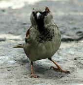 Thuốc lá giúp chim đuổi những kẻ ăn bám