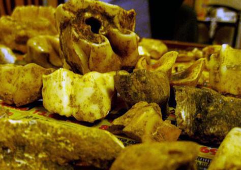 Các mẫu hóa thạch vừa được tìm thấy.