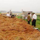 Xử lý ô nhiễm nông thôn bằng chế phẩm sinh học