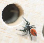 Chú nhện ở Mỹ đi du hành vũ trụ