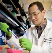 Nhà khoa học Nhật Bản và câu chuyện tế bào gốc