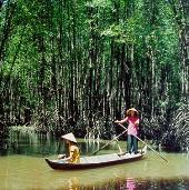 Vườn quốc gia Mũi Cà Mau sắp thành khu Ramsar