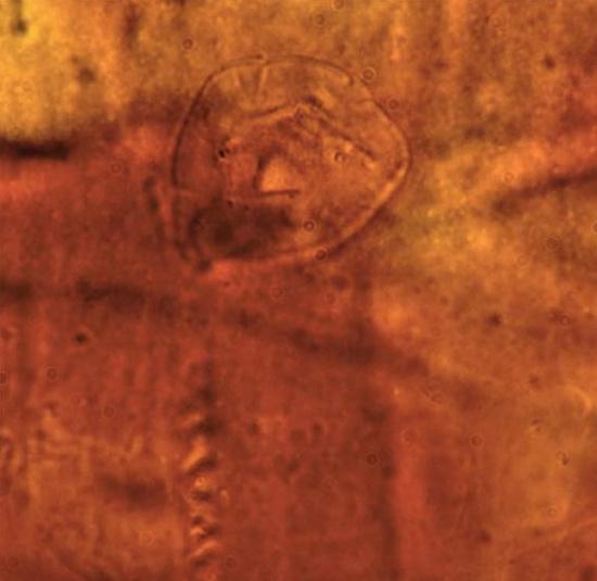 Hóa thạch sinh vật 200 triệu năm trước
