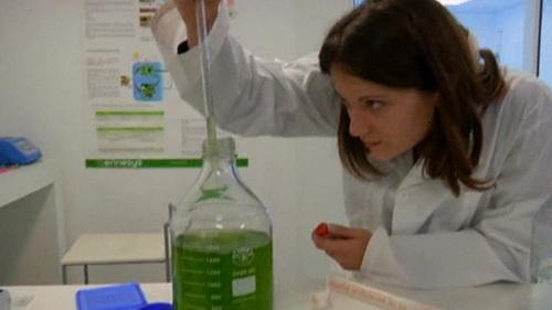 Các nhà khoa học thuộc hai công ty Mỹ và Pháp đã nghĩ ra  cách tạo năng lượng và nước sạch từ tảo