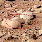 Phát hiện chuột trên sao Hỏa?