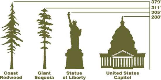 Điều này có nghĩa là Hyperion còn cao hơn cả tượng nữ thần tự do