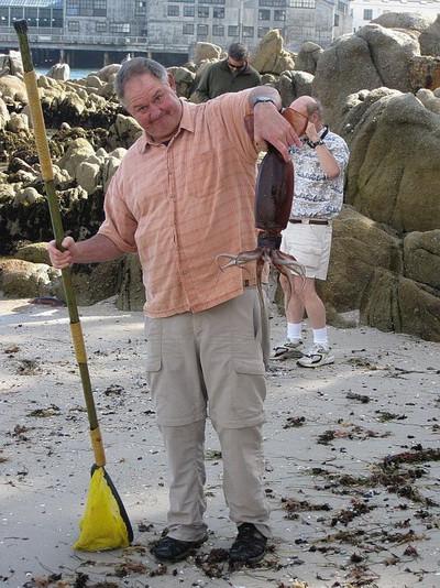Nhà sinh vật học biển William Gilly cầm một con mực  Humboldt sau nó khi bị mắc cạn