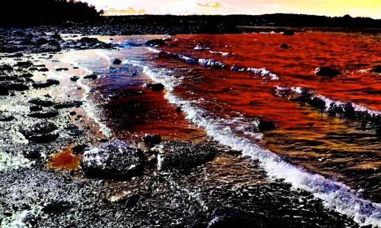 """""""Thủy triều đỏ"""" giải phóng chất độc axit domoic"""