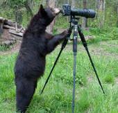 """Gấu đen làm """"nhiếp ảnh gia"""""""