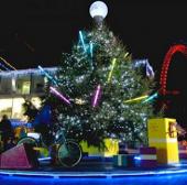 """25.000 ký sinh trùng """"trú Đông"""" trên mỗi cây thông Noel"""