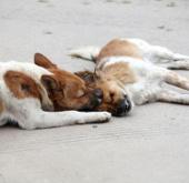 Con chó trung thành với bạn tình