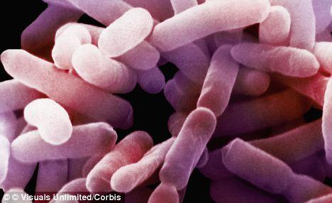 Vi khuẩn enterobacter
