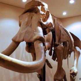 Sự thật về loài voi ở Trung Quốc đã tuyệt chủng 3000 năm trước