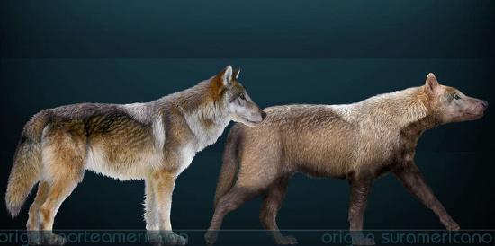 Hóa thạch loài sói đã tuyệt chủng