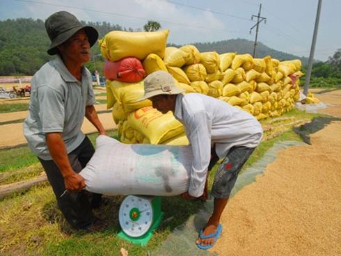 Lúa gạo Việt Nam chất lượng cao, năng suất cao là một sản phẩm nằm trong danh mục quốc gia.