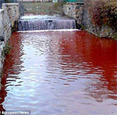 Dòng sông máu xuất hiện sau một đêm