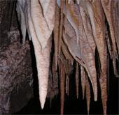 Hệ sinh thái kỳ lạ trong lòng đất