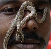 Làm chậm quá trình lão hóa nhờ chất từ nọc rắn độc