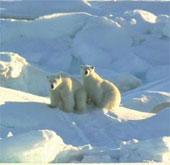 Canada đòi chủ quyền ở cực Bắc trái đất