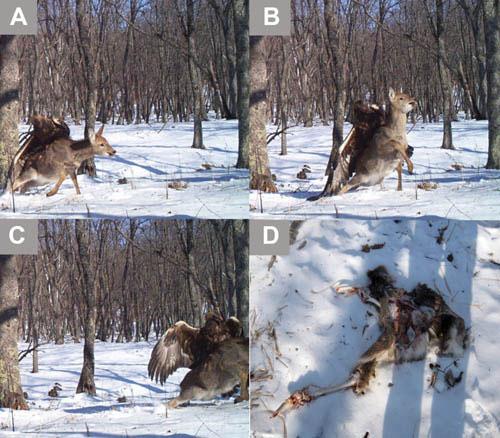 Hình ảnh động vật ấn tượng trong năm 2013