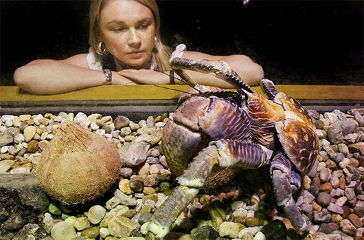 Những kỷ lục khó tin trong thế giới động vật