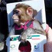 Iran đưa thành công chú khỉ thứ hai vào không gian