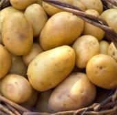Lợi ích thiết thực của khoai tây
