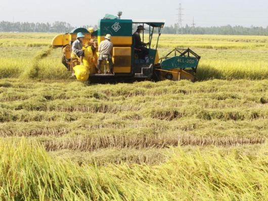 An Giang ứng dụng ảnh viễn thám vào sản xuất lúa