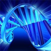 Mật mã ngầm trong ADN