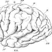 Liên Xô từng chi 1 tỷ USD vào thử nghiệm kiểm soát trí não con người