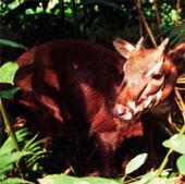 Hơn 800 sinh vật đang bị đe dọa