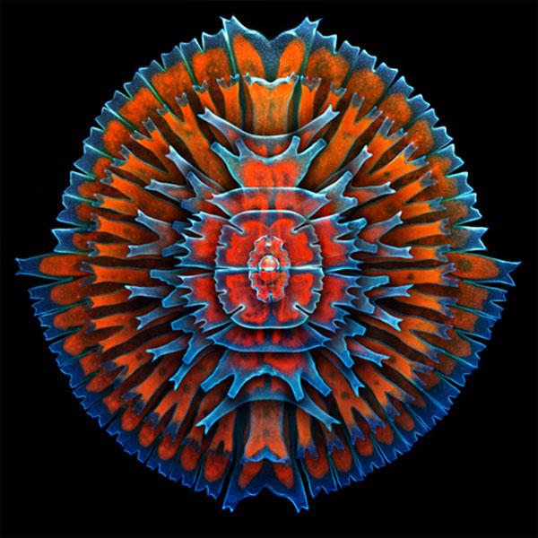 Sự sống muôn màu qua kính hiển vi